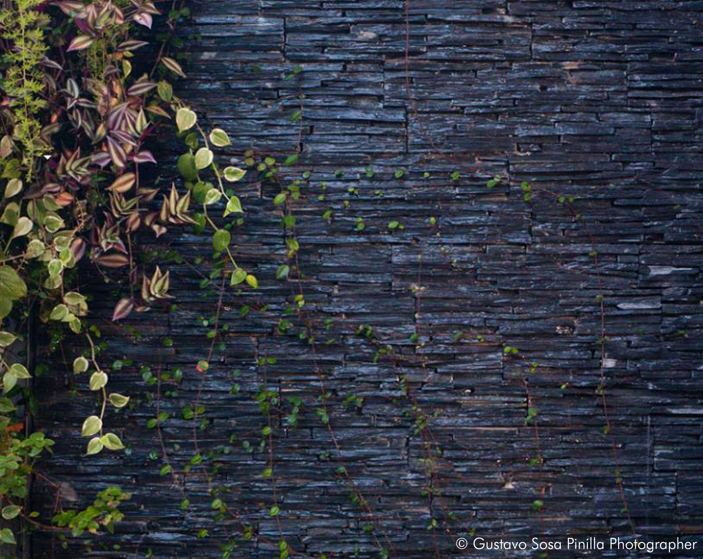 Patio Green wall - Stone Detail - Gascon Remy Architect